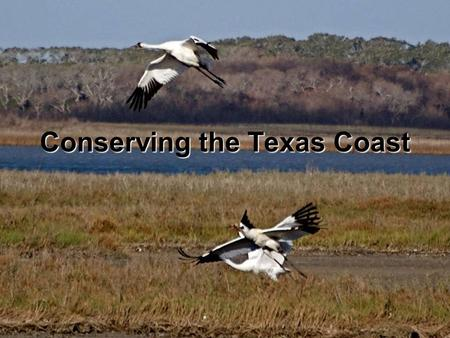 Conserving the Texas Coast. Texas has almost 400 miles of coastline.