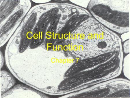 Cell Structure and Function Chapter 7. Life is Cellular Section 7-1.