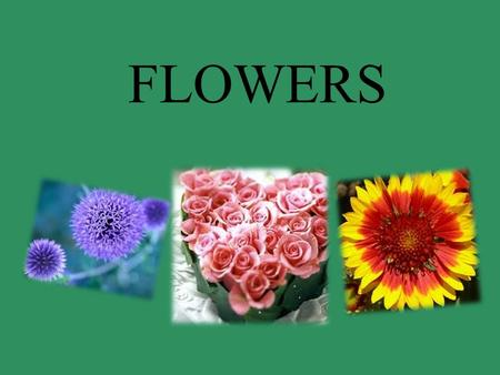 FLOWERS. Basic structure of the angiosperm flower The fertilization process Pollen and stigma self-incompatibility Reproduction and diversity of angiosperms.