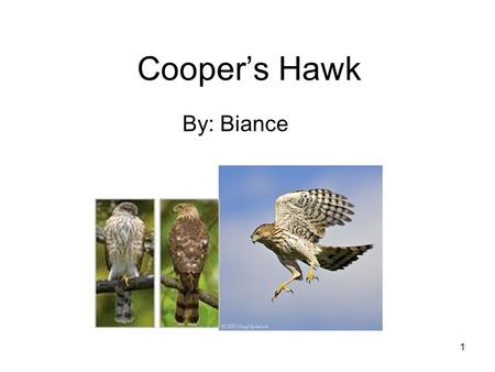 1 Cooper's Hawk By: Biance. 2 TABLE OF CONTENTS MEET THE Cooper's Hawk.….3 HOME SWEET HOME …..4 DINNER TIME……………..5 ANIMAL ADAPTATIONS…6 LABELS…………………….7.