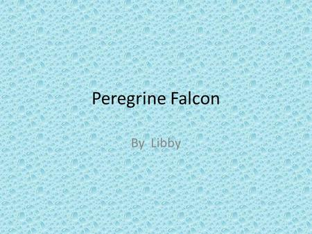 Peregrine Falcon By Libby. Quick Facts Wingspan 74-120cm Tail length 13-19cm Body length 34-58cm female weight 0.9-1.5kg Male weight 0.4-0.8kg.