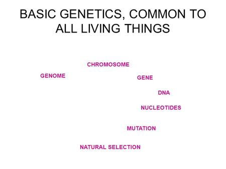 BASIC GENETICS, COMMON TO ALL LIVING THINGS GENOME NUCLEOTIDES CHROMOSOME GENE DNA MUTATION NATURAL SELECTION.