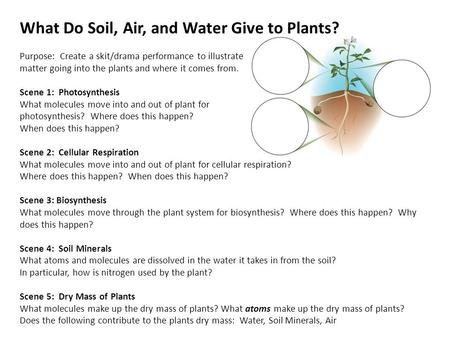 What Do Soil, Air, and Water Give to Plants