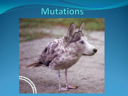Introduction A mutation is a change in the normal DNA sequence. They are usually neutral, having no effect on the fitness of the organism. Sometimes,