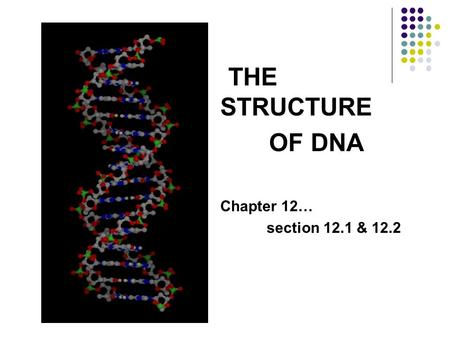 THE STRUCTURE OF DNA Chapter 12… section 12.1 & 12.2.