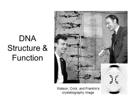 DNA Structure & Function Watson, Crick, and Franklin's crystallography image.