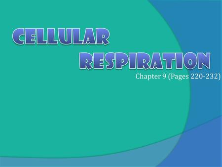 Chapter 9 (Pages 220-232). The Powerhouse Copyright Pearson Prentice Hall Overview of Cellular Respiration Cytoplasm Pyruvic acid Mitochondrion Electrons.