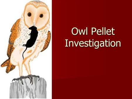 Owl Pellet Investigation. Can you identify what an owl ate from the contents of an owl's pellet? Question.
