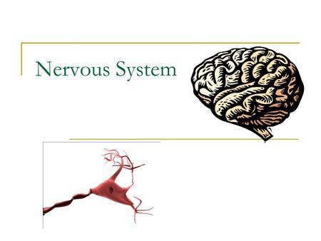 Nervous System. Structures  Brain, spinal cord, peripheral nerves Function  Recognizes and coordinates the body's response to changes in its internal.