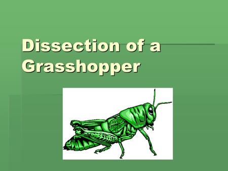 Dissection of a Grasshopper