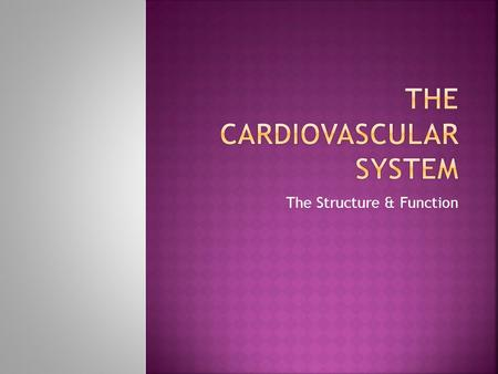 The Structure & Function.  To describe the structure of the cardiovascular system  To explain function and link this to physical features of the cardiovascular.
