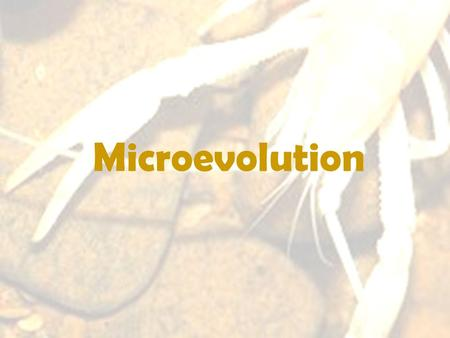 Microevolution. Levels of Evolutionary Study Microevolution: examines changes to the genes (alleles) within populations –Population Genetics: studies.