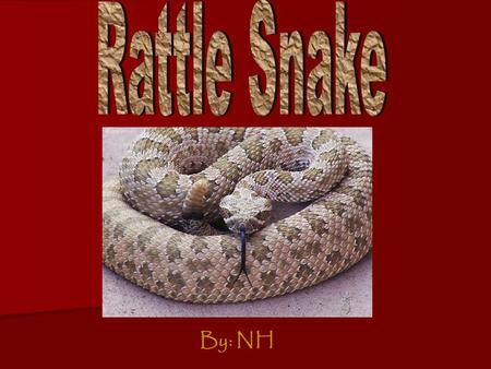 By: NH. Physical Features  The rattle snake is a big snake and prey should be scared.  The rattle snakes have brown and black skin  Their skin is scales.