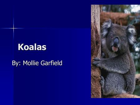 Koalas By: Mollie Garfield By: Mollie Garfield. Introduction Koalas! Koalas! Koalas! You're going to learn about koalas babies, moves and surviving! You.