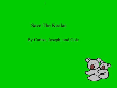 Save The Koalas By Carlos, Joseph, and Cole. Homes Koalas live in Australia. They do not have homes like people. They live in eucalyptus trees.