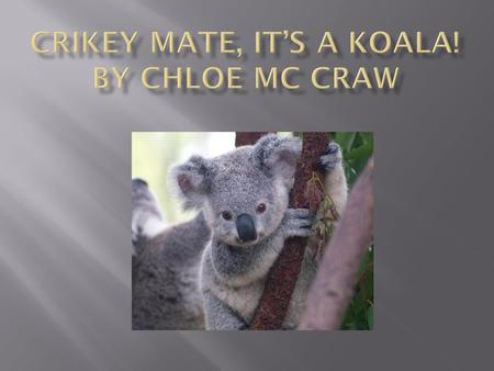 Most koalas are very fuzzy and they have white on their belly and gray on their back.