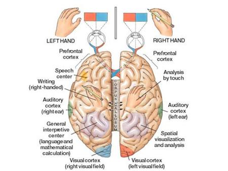 LEFT BRAIN CHARACTERISTICSRIGHT BRAIN CHARACTERISTICS 1.Rational Thinking 2.Sequential 3.Structure/Planning 4.Objectivity 5.Writing and Talking 6. Time.