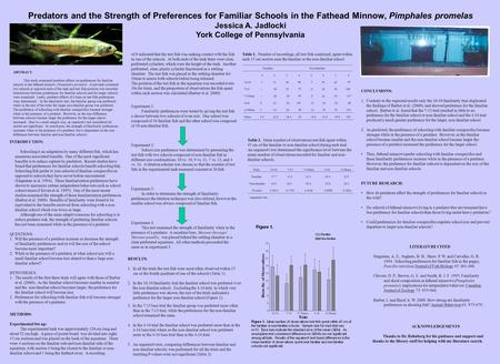 Predators and the Strength of Preferences for Familiar Schools in the Fathead Minnow, Pimphales promelas Jessica A. Jadlocki York College of Pennsylvania.