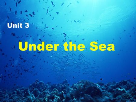 Under the Sea Unit 3. Today, we're going to take a look at the world under the sea. So, are you ready?