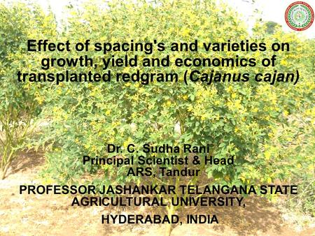 Effect of spacing's and varieties on growth, yield and economics of transplanted redgram (Cajanus cajan) Dr. C. Sudha Rani Principal Scientist & Head ARS,