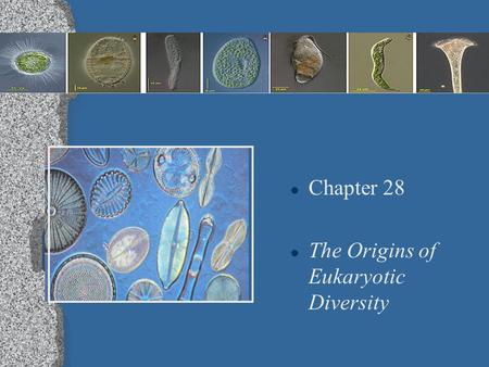 l Chapter 28 l The Origins of Eukaryotic Diversity.