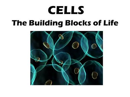 cells the building blocks of life