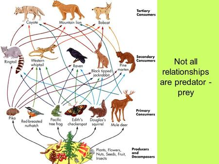 Not all relationships are predator - prey. What is symbiosis? What are the different kinds of symbiosis? Examples SYMBIOSIS.
