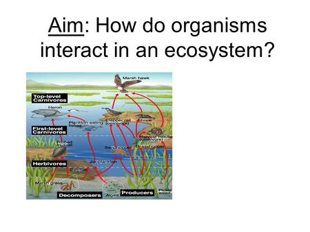 Aim: How do organisms interact in an ecosystem? Why do organisms need to eat? To get ENERGY!! Cell Respiration: C 6 H 12 O 6 + O 2 ATP + CO 2 + H 2 O.