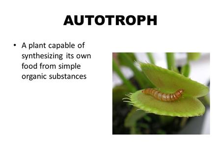 AUTOTROPH A plant capable of synthesizing its own food from simple organic substances.