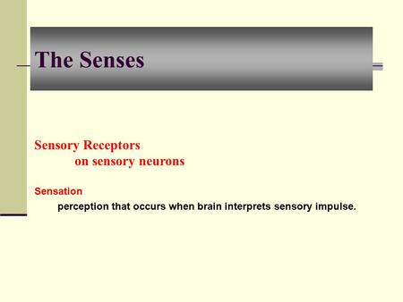 The Senses Sensory Receptors on sensory neurons Sensation perception that occurs when brain interprets sensory impulse.