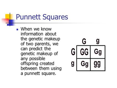 Punnett Squares When we know information about the genetic makeup of two parents, we can predict the genetic makeup of any possible offspring created between.
