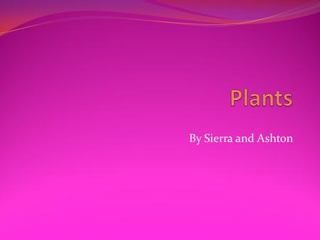 By Sierra and Ashton. Plant Needs A plant needs water, space, air, sunlight, and food.