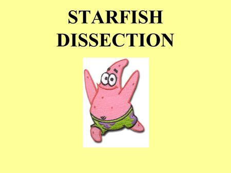 STARFISH DISSECTION. STARFISH LATIN meaning KINGDOM _____________ PHYLUM _____________________________ CLASS _______________________________ ANIMALIA.