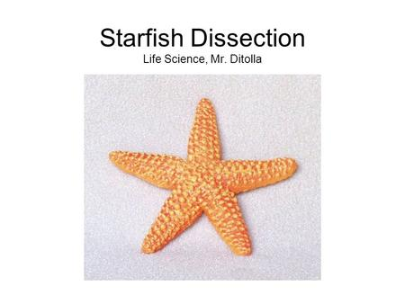 Starfish Dissection Life Science, Mr. Ditolla. Examine the top surface of your starfish and find the structures labeled below: