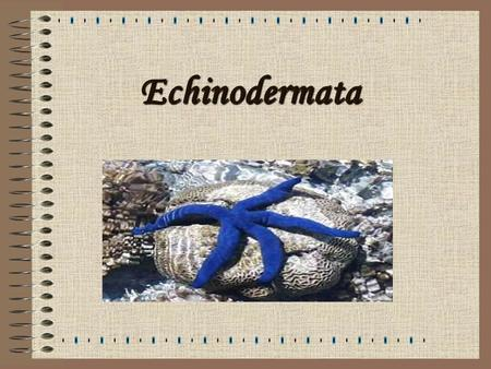 Echinodermata. What Are Echinoderms? Definition: An invertebrate marine animal usually characterized by a five-fold symmetry, and possessing an internal.