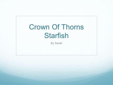 Crown Of Thorns Starfish By Sarah. What is a Crown of Thorns Starfish? The crown of thorns starfish is a nitrogen from the plant's fertilizers. That means.