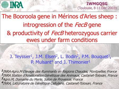 The Booroola gene in Mérinos d'Arles sheep :