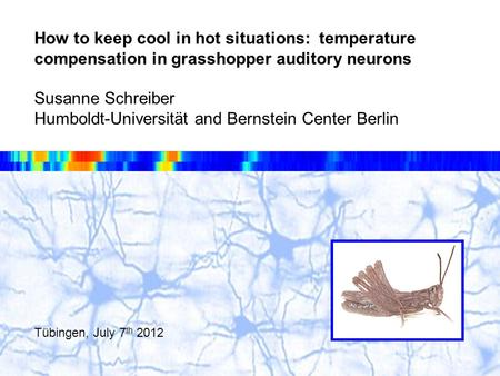 How to keep cool in hot situations: temperature compensation in grasshopper auditory neurons Susanne Schreiber Humboldt-Universität and Bernstein Center.