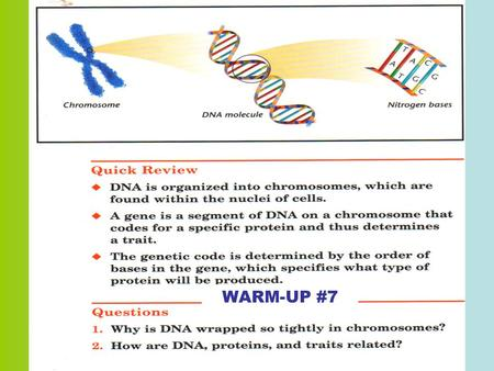 WARM-UP #7. DNA (Deoxyribonucleic Acid) Genetic material of cells… GENES – units of genetic material that CODES FOR A SPECIFIC TRAITGENES – units of.