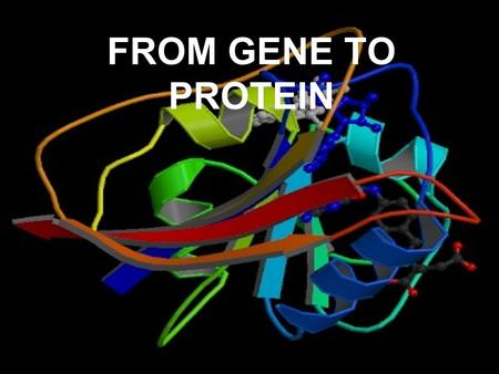 FROM GENE TO PROTEIN. YOU MUST KNOW… THE KEY TERMS GENE EXPRESSION, TRANSCRIPTION, AND TRANSLATION HOW TO EXPLAIN THE PROCESS OF TRANSCRIPTION HOW EUKARYOTIC.