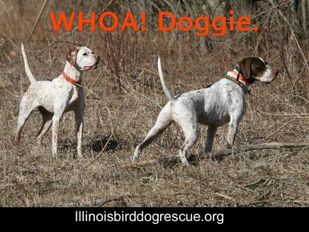 Illinoisbirddogrescue.org. WHOA! Doggie. Photography by Yukiko McFarling Edited by Lisa Spakowski Copyright Illinois Birddog Rescue, Inc For Wubs.