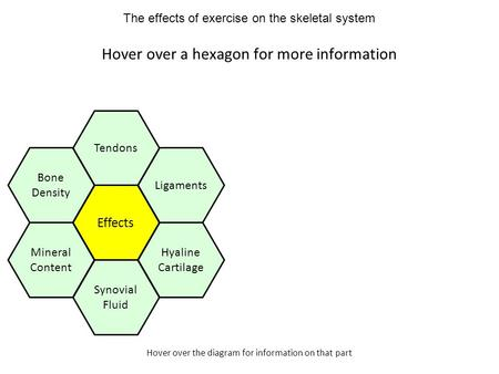 Hover over the diagram for information on that part Hover over a hexagon for more information Effects Tendons Ligaments Hyaline Cartilage Mineral Content.