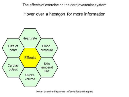 Hover over the diagram for information on that part The effects of exercise on the cardiovascular system Hover over a hexagon for more information Effects.