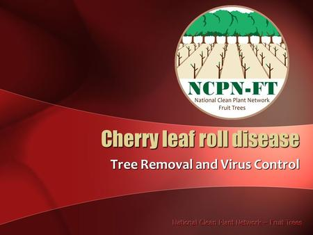 Cherry leaf roll disease Tree Removal and Virus Control.