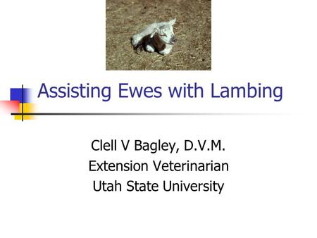 Assisting Ewes with Lambing