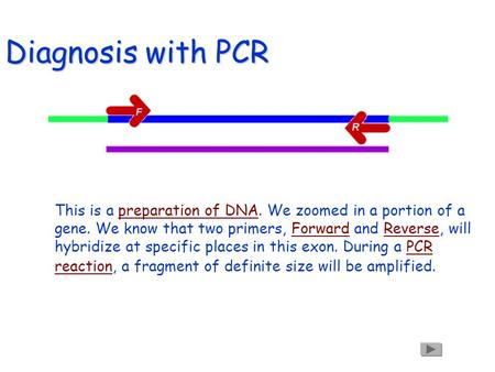 Diagnosis with PCR This is a preparation of DNA. We zoomed in a portion of a gene. We know that two primers, Forward and Reverse, will hybridize at specific.
