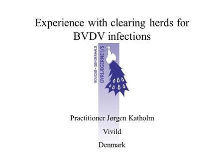 Experience with clearing herds for BVDV infections Practitioner Jørgen Katholm Vivild Denmark.