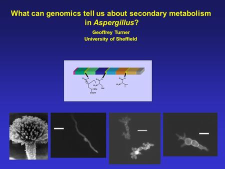 What can genomics tell us about secondary metabolism in Aspergillus? Geoffrey Turner University of Sheffield.