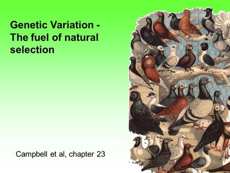 Genetic Variation - The fuel of natural selection Campbell et al, chapter 23.