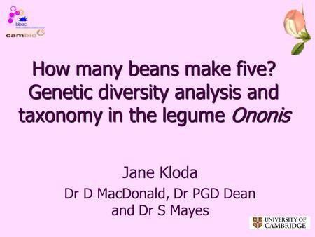How many beans make five? Genetic diversity analysis and taxonomy in the legume Ononis Jane Kloda Dr D MacDonald, Dr PGD Dean and Dr S Mayes.